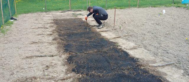 Application of biochar on test-site in Lublin